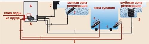 Плавательный биопруд в Москве