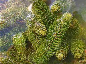 Растения для искусственного водоёма в Краснодарском крае. Разновидности водных и прибрежных растений для пруда.
