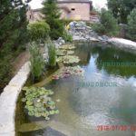 Биопруд для купания. построить искусственный пруд в Подмосковье